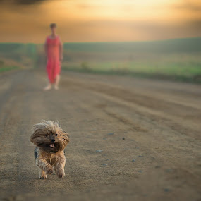 Fun by David Botha - Animals - Dogs Running ( yorkie, sunset, beautiful, dog, running )