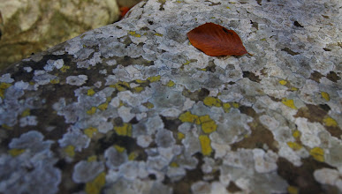 Photo: Leaf on rock action