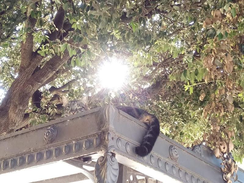 Gatto al sole di tesoka72