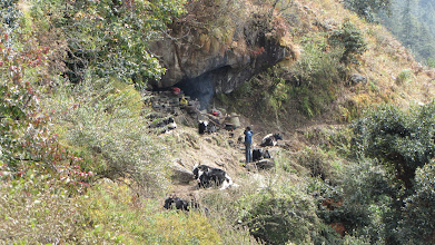 Photo: Yak herders cave on way to gumba Langdang