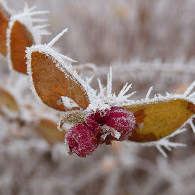 Frozen by Valentina Masten - Nature Up Close Leaves & Grasses