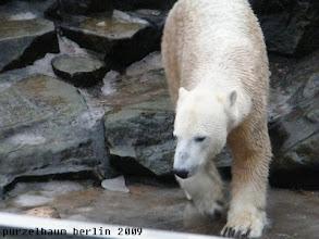 Photo: Besucht Knut eben den leeren Pool ;-)