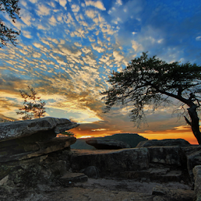 by Joel Eade - Landscapes Sunsets & Sunrises ( the best, cool, tree, buzzards roost, sunset, beautiful, stone, prety, perfect,  )