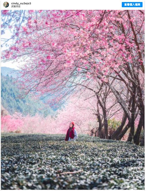 2021新春假期 到武陵農場賞櫻花走春
