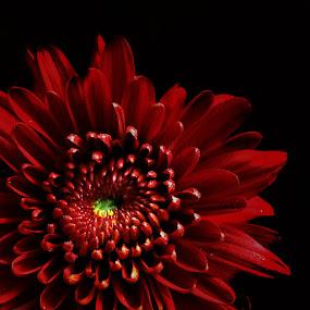 by Hatdy Tridjaja - Nature Up Close Flowers - 2011-2013