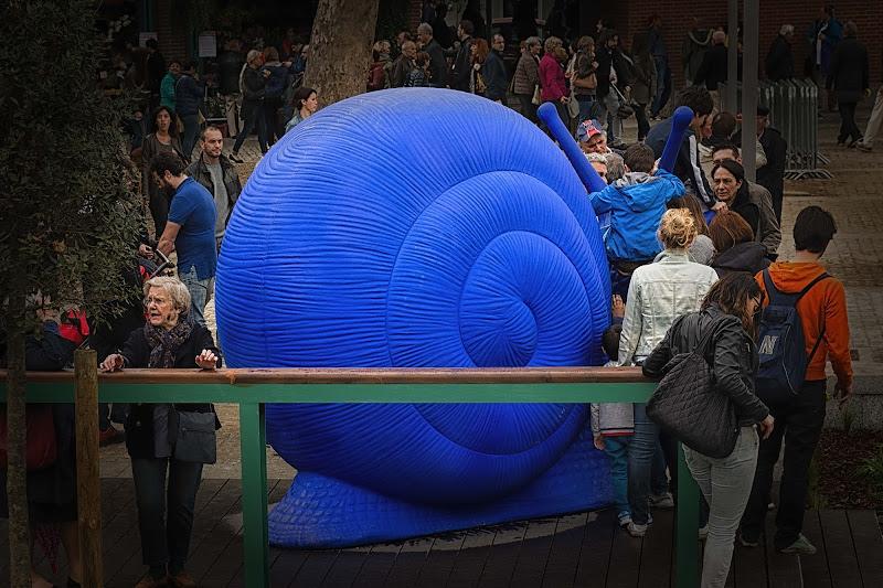 La chiocciola blu attira di Concetta Caracciolo