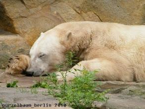 Photo: Knut im Reich der Traeume :-)