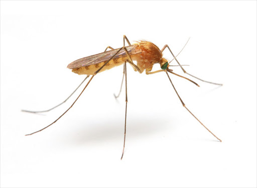 7 things worth knowing about mosquitoes