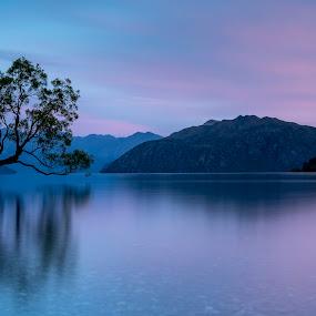 Daybreak by David Feuerhelm - Landscapes Sunsets & Sunrises ( wanaka, tree, long exposure, lake, serene )