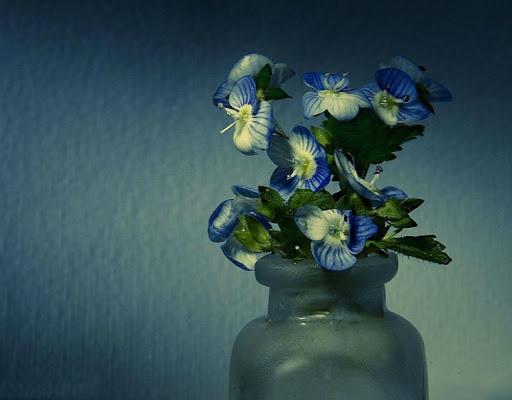 Il più piccolo vaso di fiori .. di AlfredoNegroni