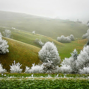 Morning Dress by Gregor Znidarsic - Landscapes Mountains & Hills (  )