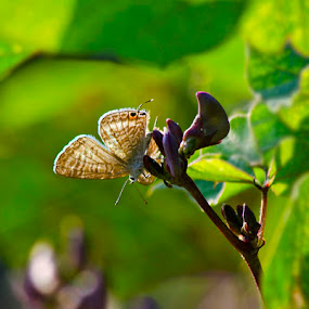 Nature with Naturals by Nirupam Roy - Nature Up Close Gardens & Produce ( butterfly, nature, nirupam, closeup, photography )