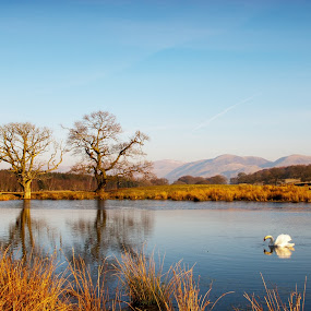 Reflection by Kenny Routledge - Landscapes Waterscapes ( swans, reflection, leadhills, dumfries and galloway, trees, loch, buccleuch estates )