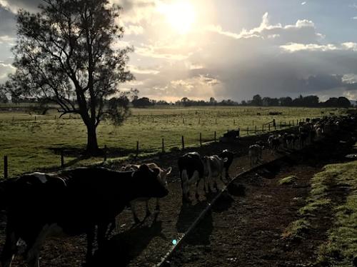 117 hectare  Dairy Grafton NSW Big River Milk