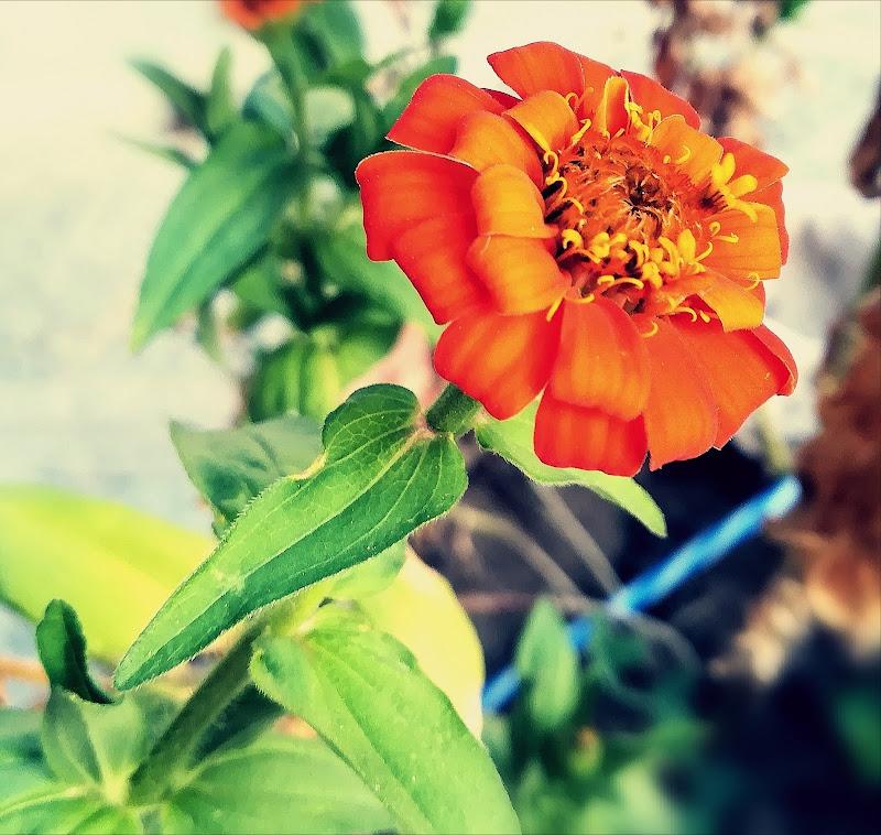 Ultimi fiori di Robyvf