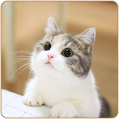 Cute Cat HD Wallpapers