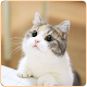 Cute Cat HD Wallpapers apk