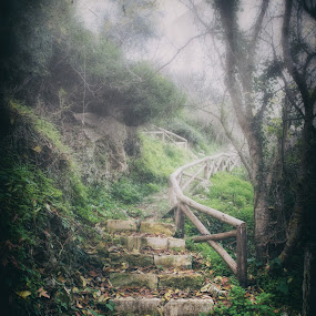 The foggy path to the light. by Stavros Troullinos - Nature Up Close Leaves & Grasses ( foggy, stairs, nature, fog, path, trees, leaves, mist,  )