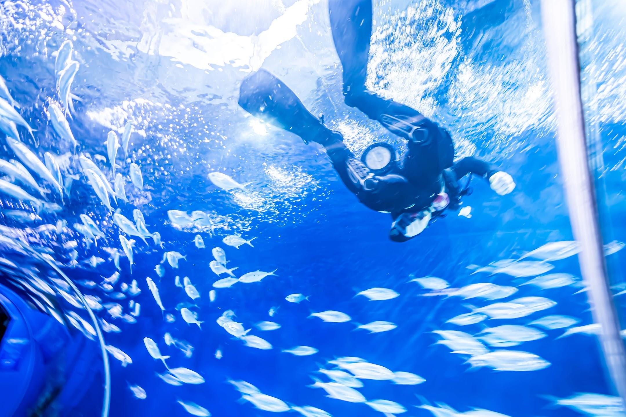 上海海洋水族館4