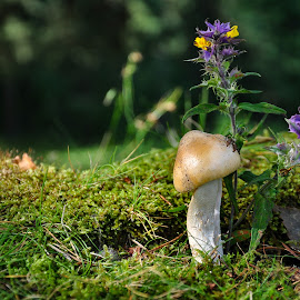 by Irena Gedgaudiene - Nature Up Close Mushrooms & Fungi