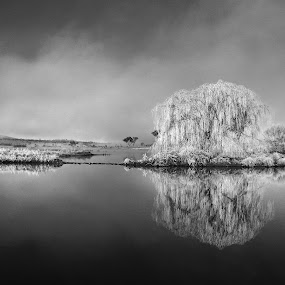 Frosty Morning on Dangar's Lagoon by Graham MacDougall - Landscapes Waterscapes ( mono-tone, reflection, b&w, black and white, dangars lagoon, frost, b and w, uralla, morning, landscape, monotone )