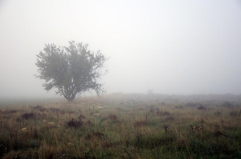 silence di Primula Vico