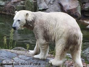 Photo: Knut hat die Insel leer geputzt :-)