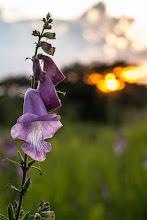 Photo: Flowery sunset; Por-do-sol florido.