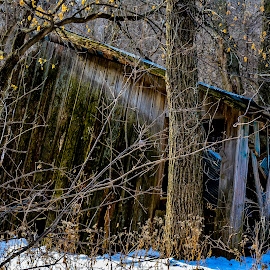 The Forgotten by Bill Phillips - Buildings & Architecture Decaying & Abandoned ( natural, woods, farm, winter, decay, building )