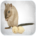 Rat Sounds icon