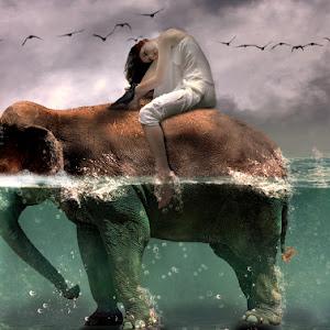 elefante-underwater.jpg