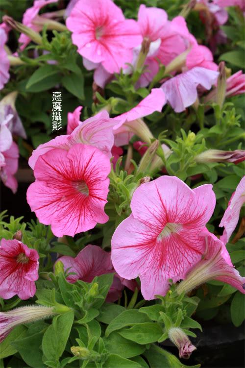 china_green_05