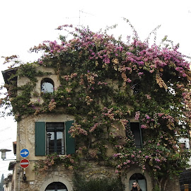 House wiht big bouganville by Patrizia Emiliani - Buildings & Architecture Homes ( big, bouganville, house,  )