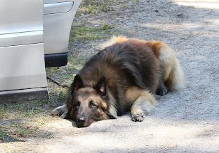 Photo: Spinoys Laios vilar efter spåret och inför uppletandet