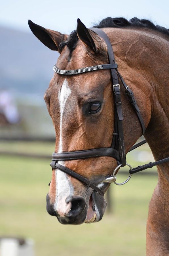 by Renette Kleinhans - Animals Horses