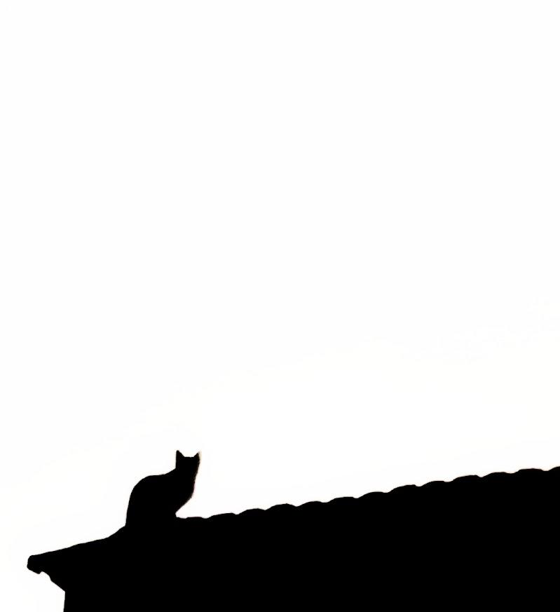 il gatto sul tetto che scotta di gds75photo