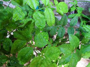 Photo: Auch Pflanzen brauchen Wasser (Erika)