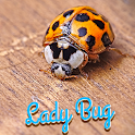 Lady Bug Wallpaper icon