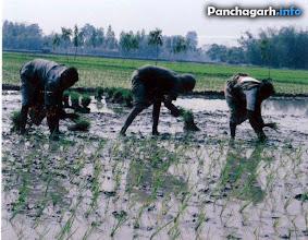Photo: Farmers in Panchagarh