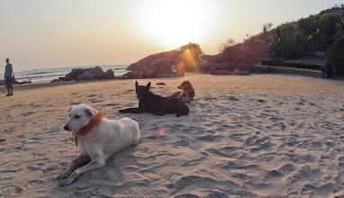 Photo: shanti dogs