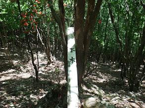 一本木の標識