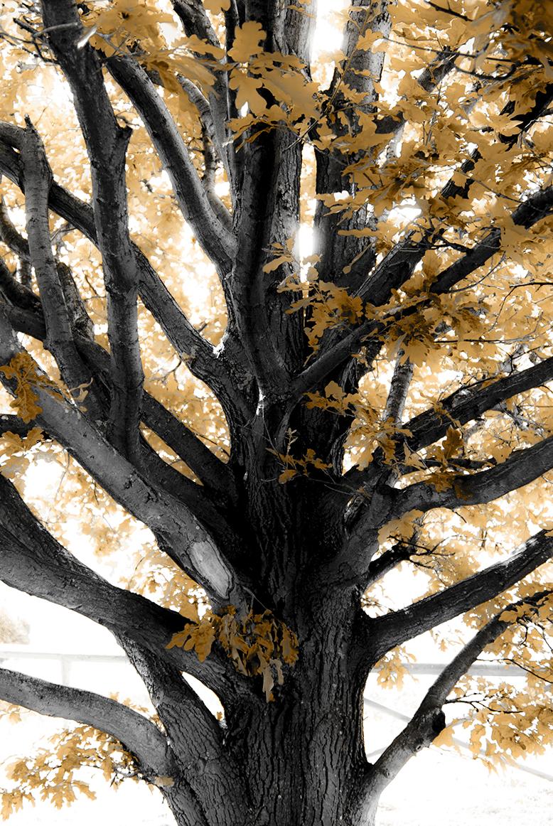 albero autunnale di fabriziodorazioph