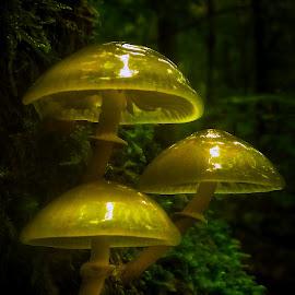 by Mario Pavlić - Nature Up Close Mushrooms & Fungi