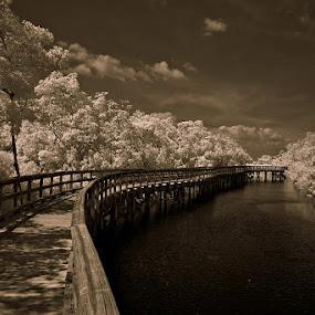I R Robinsons by Jeremy Barton - Landscapes Forests ( water, mangroves, florida, bradenton, bridge, preserve )
