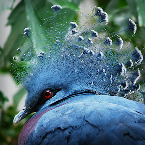 by Brandon Rechten - Animals Birds ( bird, wildlife )