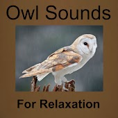 Owl Sounds for Relaxation