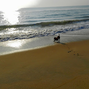 Dog and the sea by Govindarajan Raghavan - Animals - Dogs Playing (  )