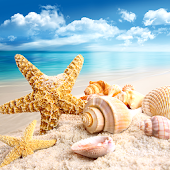 Seashells Live Wallpapers