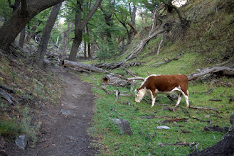 Photo: Trailside wildlife greeted us as we began our hike to view Cerro Fitz Roy