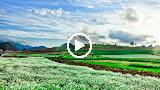 Đường Tím Bằng Lăng (Remix) - Nhạc Sống